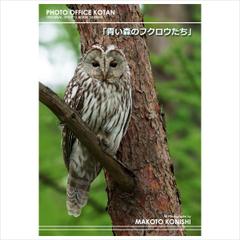 オリジナルフォトブック「青い森のフクロウたち」2011