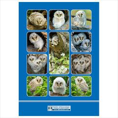 オリジナルA4クリアファイル「フクロウの子供たち」2015