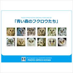 ポストカードセット「青い森のフクロウたち」  2014