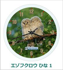 オリジナル壁掛時計 「エゾフクロウ ひな 01」 2013