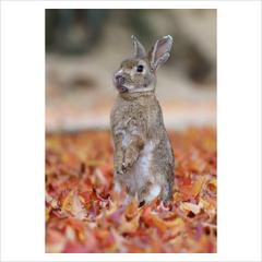 ポストカード単品 「ノウサギ 02」 2012