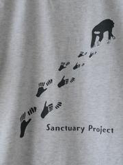 サンプロオリジナルTシャツ2017_M02