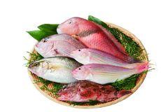平戸地魚詰合せA