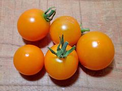 ミニトマト(オレンジ)