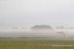 ポストカード 朝靄の干拓地