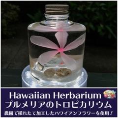 【ハワイアンなハーバリウム】プルメリアのTROPICARIUM(花色:ソフトピンク系・スタッキングボトル) 農園特製のプリザーブドフラワー使用
