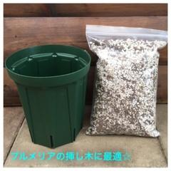 【小ぶりなカット苗の植付け用】プルメリア専用培養土とスリット鉢のセット(4号ロングスリッド鉢)