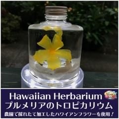 【ハワイアンなハーバリウム】プルメリアのTROPICARIUM(花色:イエロー系・スタッキングボトル) 農園特製のプリザーブドフラワー使用