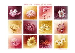 <ワイン画>ワインで描く「四季の花」 A4アートポスター