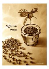 <素彩画>インスタントコーヒーで描く「コーヒーの木とコーヒー豆」  A4アートポスター