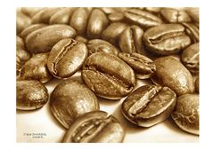 <素彩画>インスタントコーヒーで描く「コーヒー豆」  A4アートポスター