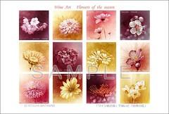 <ワイン画>「四季の花」 ポストカード