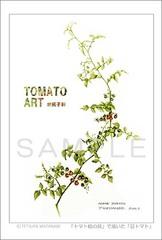 <素彩画>「豆トマト」 ポストカード