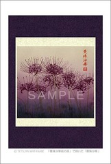 <素彩画>「曼珠沙華」 ポストカード