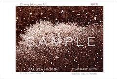 <素彩画>「桜吹雪」 ポストカード