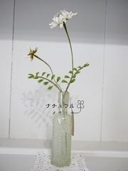 白れんげ草