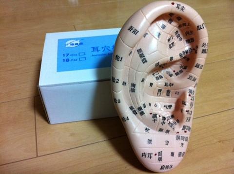 耳つぼ模型(17cm)