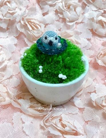 ミニ鉢インコ(ヨウム)