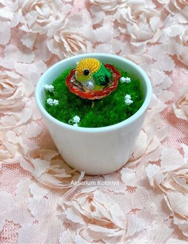ミニ鉢インコ(シロハラ)