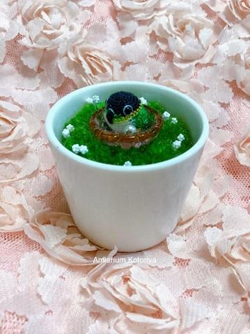 ミニ鉢インコ(ズグロシロハラ)