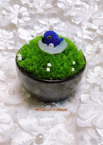 ミニ鉢インコ(スミレコンゴウ)