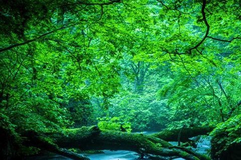 10/25・28 Gaia Work〜森と植物を癒す