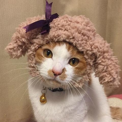 ぷーにゃん帽