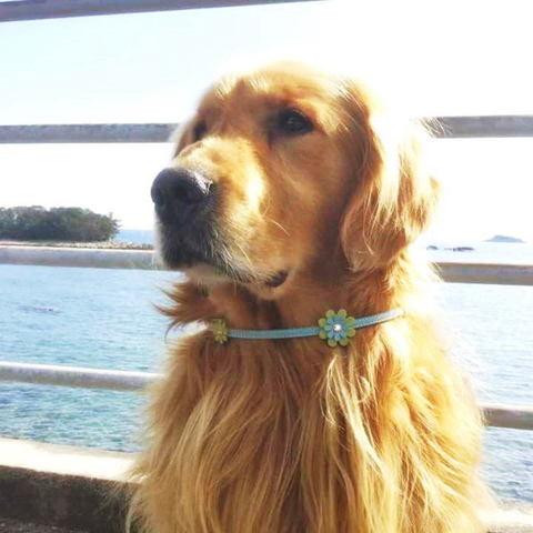【送料無料】セレブに大人気★海辺で生まれたお花のネックレス【大型犬】長さ60cm