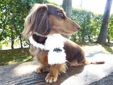 【送料無料】迷彩ぽっかぽかマフラー(S)小型犬