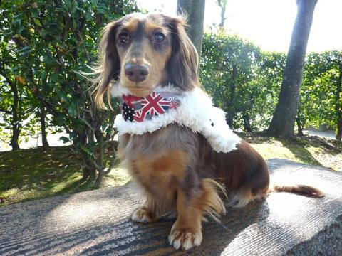 【送料無料】イギリスぽっかぽかマフラー(S)小型犬
