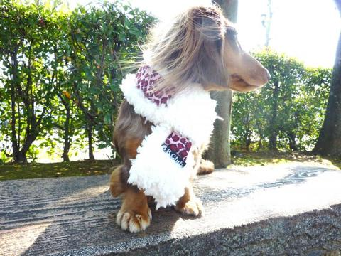 【送料無料】ヒョウぽっかぽかマフラー(M)中型犬