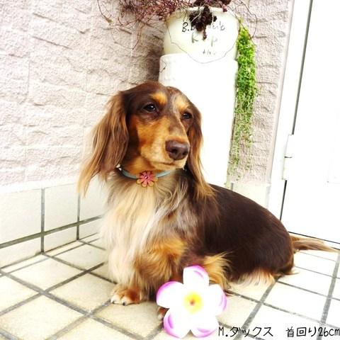 【送料無料】セレブに大人気★海辺で生まれたお花のネックレス【小型犬】長さ26cm