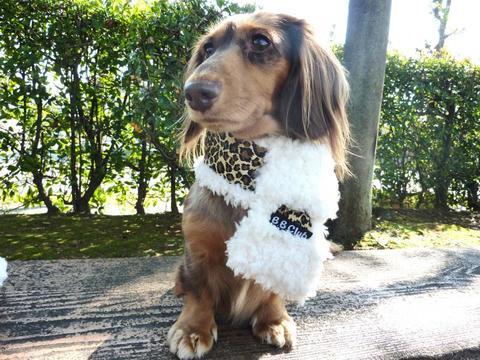 【送料無料】ヒョウぽっかぽかマフラー(S)小型犬