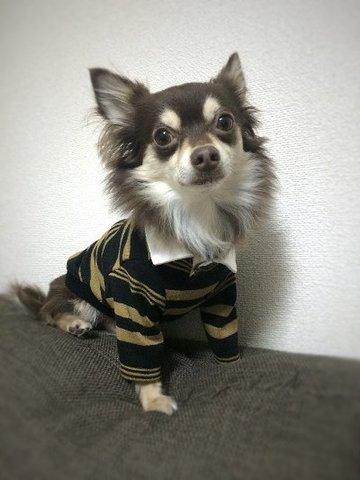 男前ポロシャツ