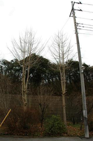 庭木や街路樹の伐採