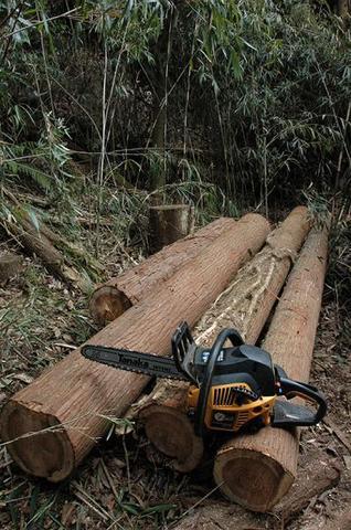 手入れされてない山の間伐作業