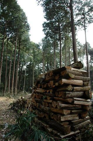 針葉樹の焚きつけ用の薪10kg