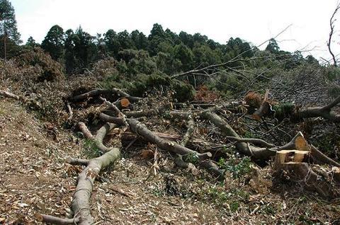 薪の原木の所在情報