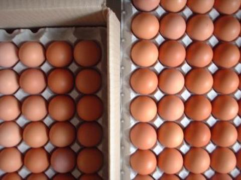 平飼い自然卵 160個