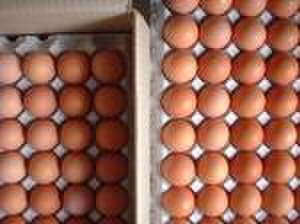 平飼い自然卵 80個