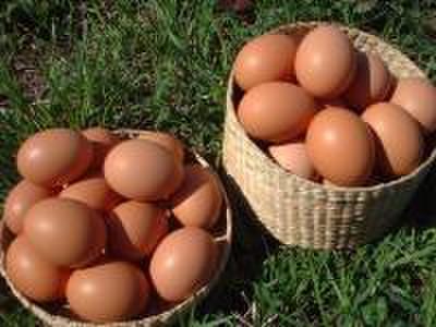 平飼い自然卵 50個