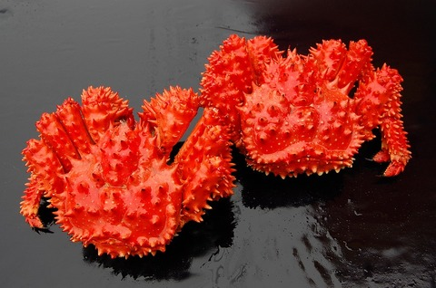 お得!根室名産「花咲かに」 2尾送料込セット 関西・中国・四国・九州・沖縄向け