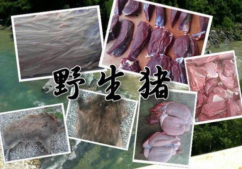 野生肉限定会員 少量購入(毎月5キロ以内)