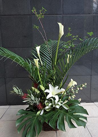 G-F0044 贈答・祝花