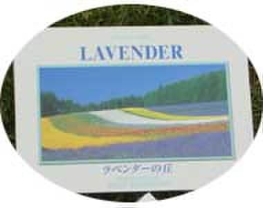 吉本良二「ラベンダーの丘」ポストカード10枚セット