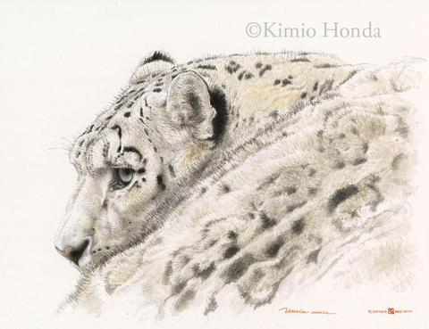 Honda Kimio Limited Edition Quality Giclee Print ユキヒョウ 横顔