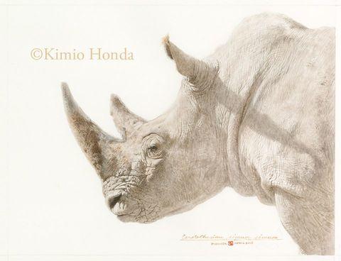 Honda Kimio Limited Edition Quality Giclee Print シロサイ