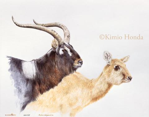 Honda Kimio Limited Edition Quality Giclee Print ナイルリーチェ