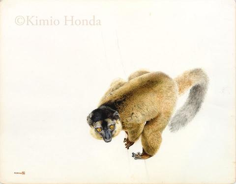 Honda Kimio Limited Edition Quality Giclee Print シロエリキツネザル