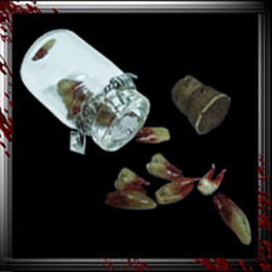 JC007/人体小瓶/ 歯/オールド